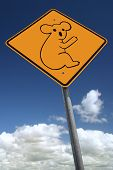 Watch Out For Koala Bears