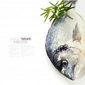 pescado fresco dorada con tomillo sobre blanco - comida y bebida (con texto de muestra extraíble fácil)