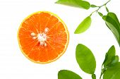 Orange slices and green leaves