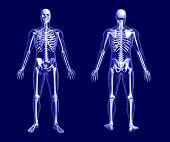 X-ray Skeleton On Blue