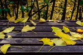 Ginkgo leaves on the bench