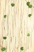 Leaves Ceropegia Woodii On Wooden Texture, `ice Tree`
