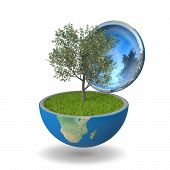 Fruit Tree Inside Planet
