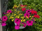 Beautiful Hanging Flowerpot Basket