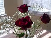 My Roses!