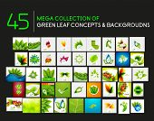 Vector mega collection of nature leaves, eco waves, abstract flowers for