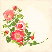 foto of dog-rose  - Branch with flowers and rose hips - JPG