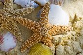 Starfish And Shells On The Beach