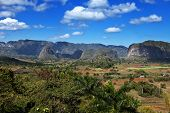 Cuba. Tropical nature of Vinales Valley
