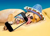 picture of crazy hat  - drunk chihuahua dog taking a selfie with smartphone - JPG