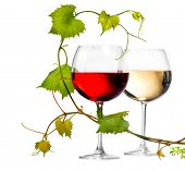Wine. Two Glasses of red and white wine decorated with grape leaves. Glass of wine isolated on white background. Rose. Vine leaf. Art design element