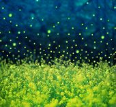 Field of canola or rapeseed with, sparkling glowing light. Glowing light has been added and  rendere