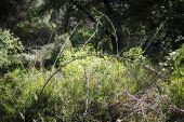 Arch In Pinewood Forest Near Marina Romea