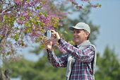 stock photo of judas tree  - Mature man taking a picture using smartphone - JPG