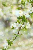 Beautiful fruit blossom outdoors