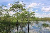 Everglades Landschaft 6