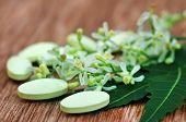 Pills Made From Medicinal Neem