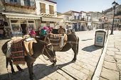 HYDRA, GREECE - MAY 7, 2014:Donkey at the Greek island, Hydra. They are the only means of transport
