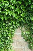 Wall and plant