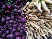 Yellow abd purple radish at the farmers Market