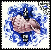 Vintage  Postage Stamp.  Salt-water Shell.