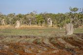 pic of termite  - Magnetic termite mounds Litchfield National Park Australia - JPG