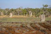 Magnetic Termite Mounds, Litchfield Natonal Park, Australia