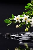 picture of gardenia  - still life with gardenia on wet black pebbles  - JPG