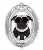 Dog In A Frame