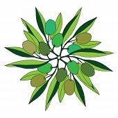 Green olive illustration on white