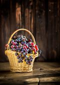 Grape Clusters In The Basket On Rustic Wooden Background. Fall Harvest Season