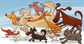 cães de corrida