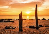 Dead tree trunks on tropical beach in sunset time
