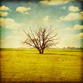 Lonely tree in the field.Grunge style.