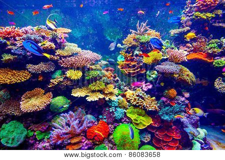 Coral Reef And Tropical Fish In Sunlight Singapore Aquarium Poster