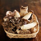 foto of morel mushroom  - basket of assorted gourmet mushrooms such as maitake - JPG