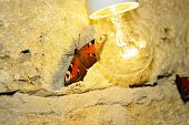 Butterfly And Light