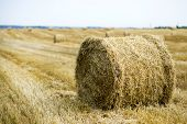 pic of hay bale  - Hay bales on the field after harvest - JPG
