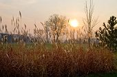 stock photo of tall grass  - autumn field with tall grass at sunset - JPG