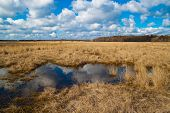 image of veld  - landscape flooded meadows in early spring - JPG