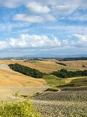 picture of senesi  - Crete senesi characteristic landscape in province of Siena (Tuscany Italy) at summer.