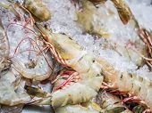 stock photo of tiger prawn  - Big tiger prawn expensive seafood selling on crushed ice - JPG