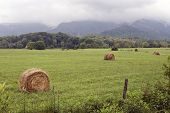 foto of hay bale  - Beautiful shot of a field full of bales of hay in the country - JPG