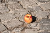picture of paving stone  - Withered apple on grunge street stone paving