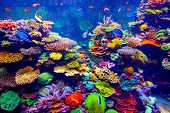 stock photo of fish  - Coral Reef and Tropical Fish in Sunlight - JPG