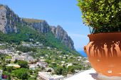stock photo of plant pot  - Potted plant on the cliff overlooking the town of Capri  - JPG