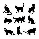 picture of predator  - Vector cats set - JPG
