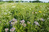 Постер, плакат: Varied Plant And Wildflowers In The Field Edge