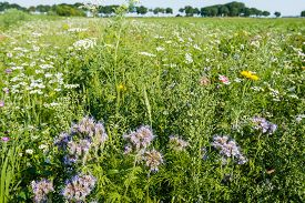 picture of biodiversity  - Closeup of a multicolored border with wild flowers and plants next to a field - JPG