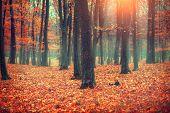 Autumn, Fall scene. Beautiful Autumnal park. Beauty nature scene. Autumn landscape, Trees and Leaves poster